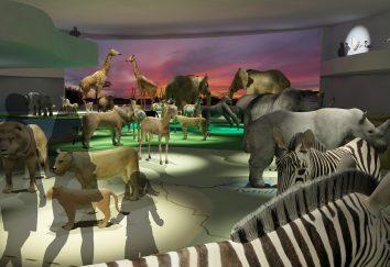 Miami Wildlife Museum · África